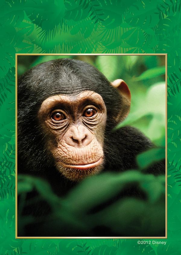 Chimpanzee 2000x2818