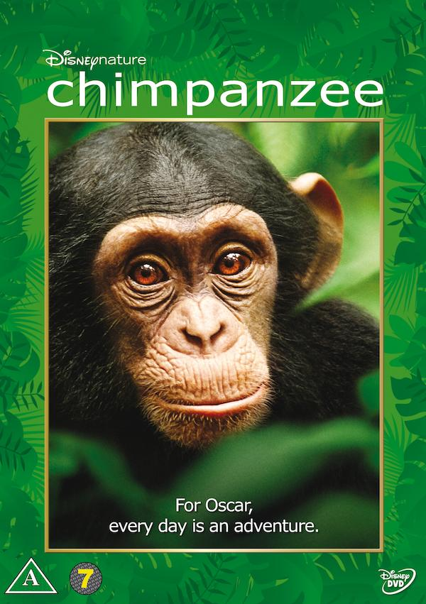 Chimpanzee 1548x2196